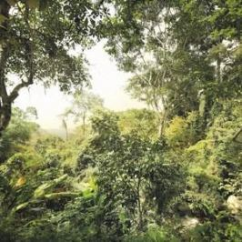 Фотообои Komar Dschungel (3,68х2,48 м) (XXL4-024)